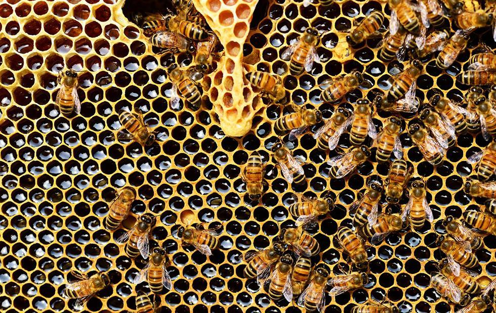 Insecticides found in honey show major global threat to bees