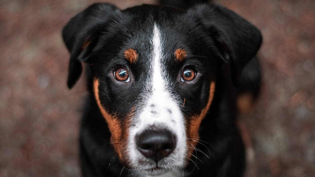 Dogs can smell cancer in blood with astounding accuracy