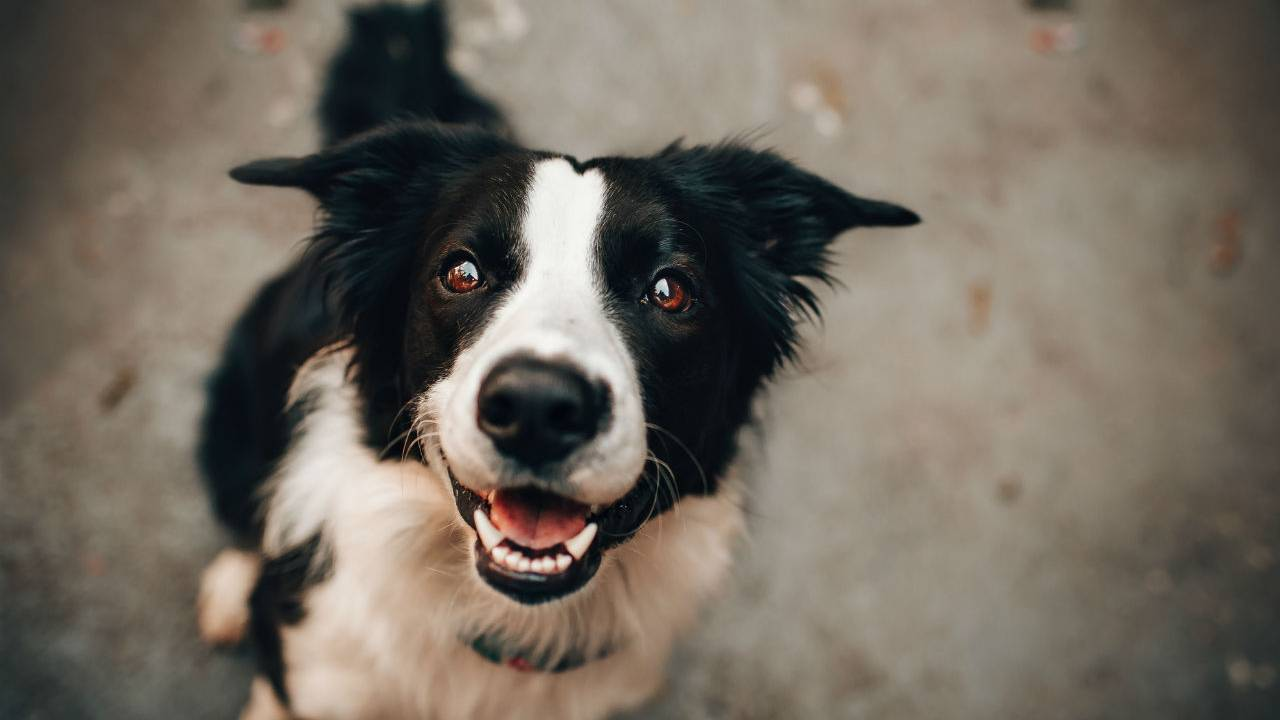 Dog treat salmonella warning issued for multiple states