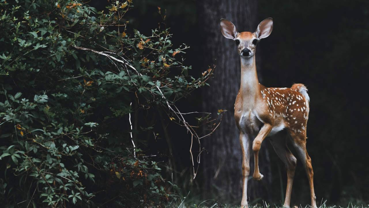 CDC warns Michigan hunter may have contracted tuberculosis from deer