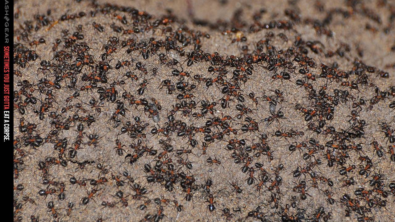 Cannibal wood ant colony survives years sealed in nuke bunker, plus a happy ending