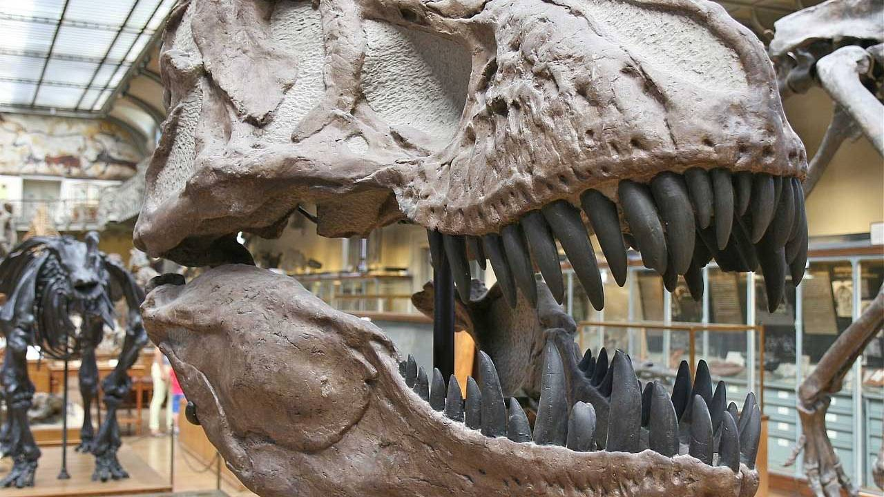 Bone-gnawing carnivorous dinosaur replaced teeth rapidly