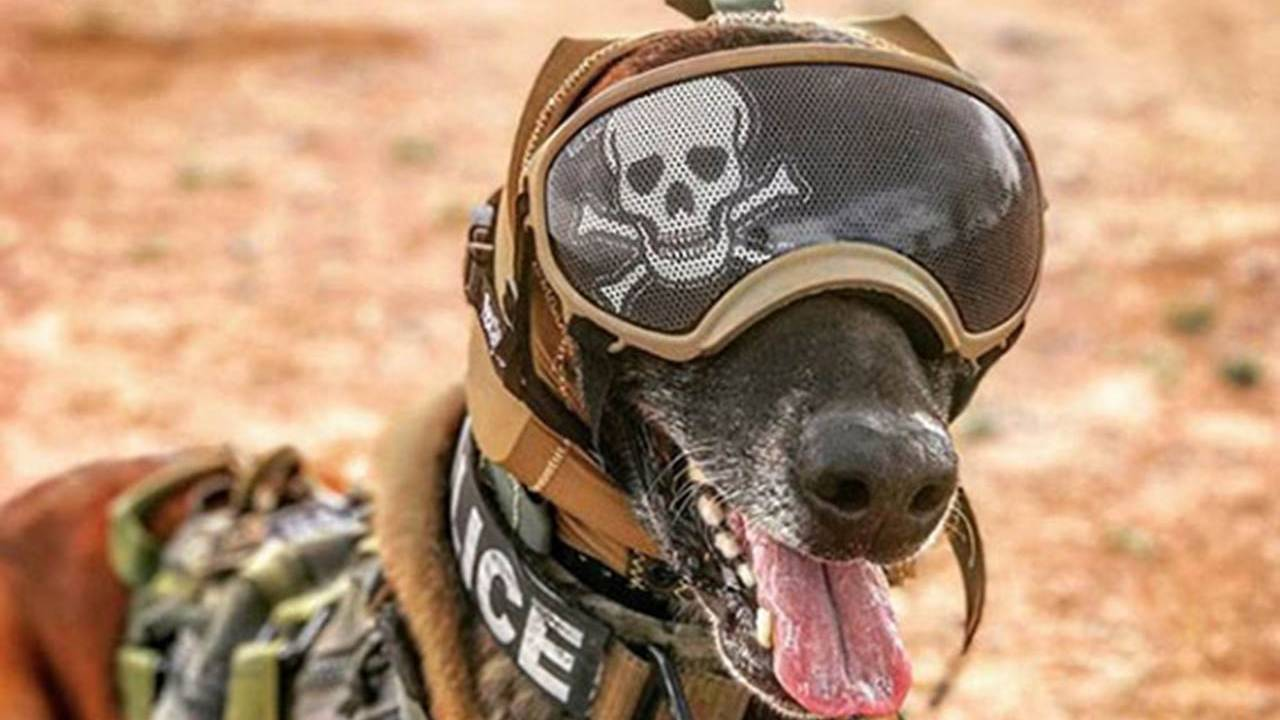 US Army combat dogs get special hats to protect their hearing
