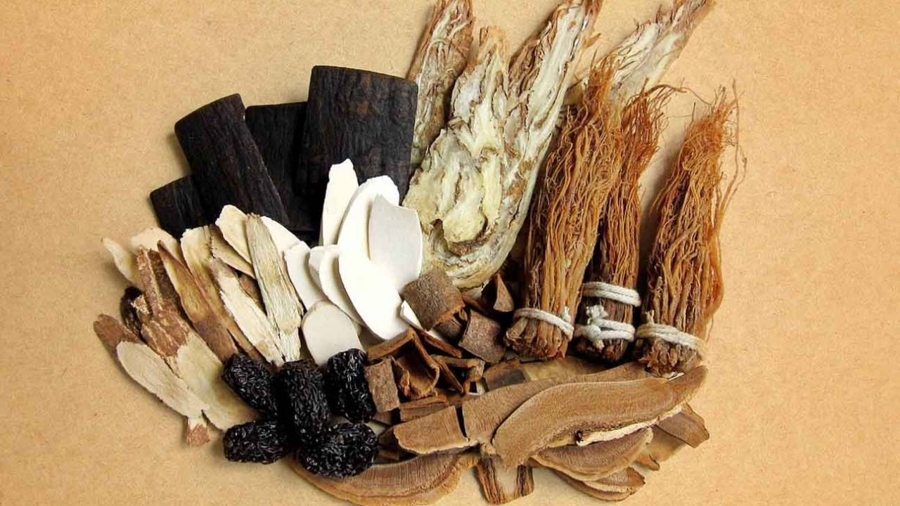 Study finds popular Chinese herb activates energy-burning brown fat