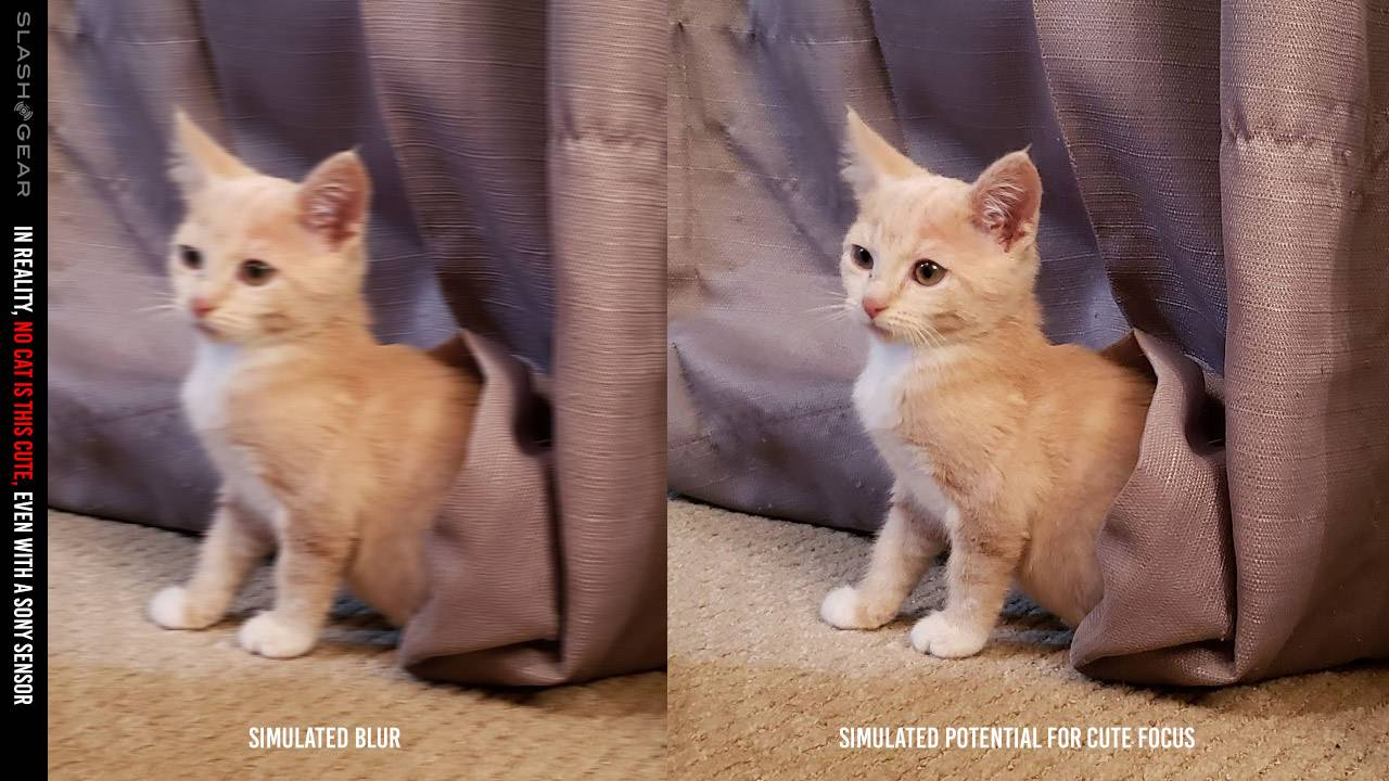Sony Develops Technology to Make Cat Photos Less Blurry