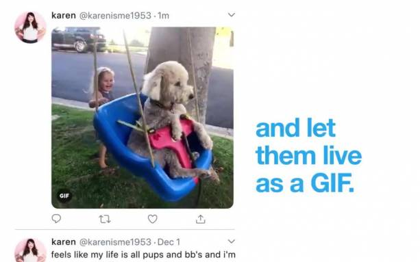 Twitter now uploads iOS Live Photos as GIFs, will preserve JPG quality