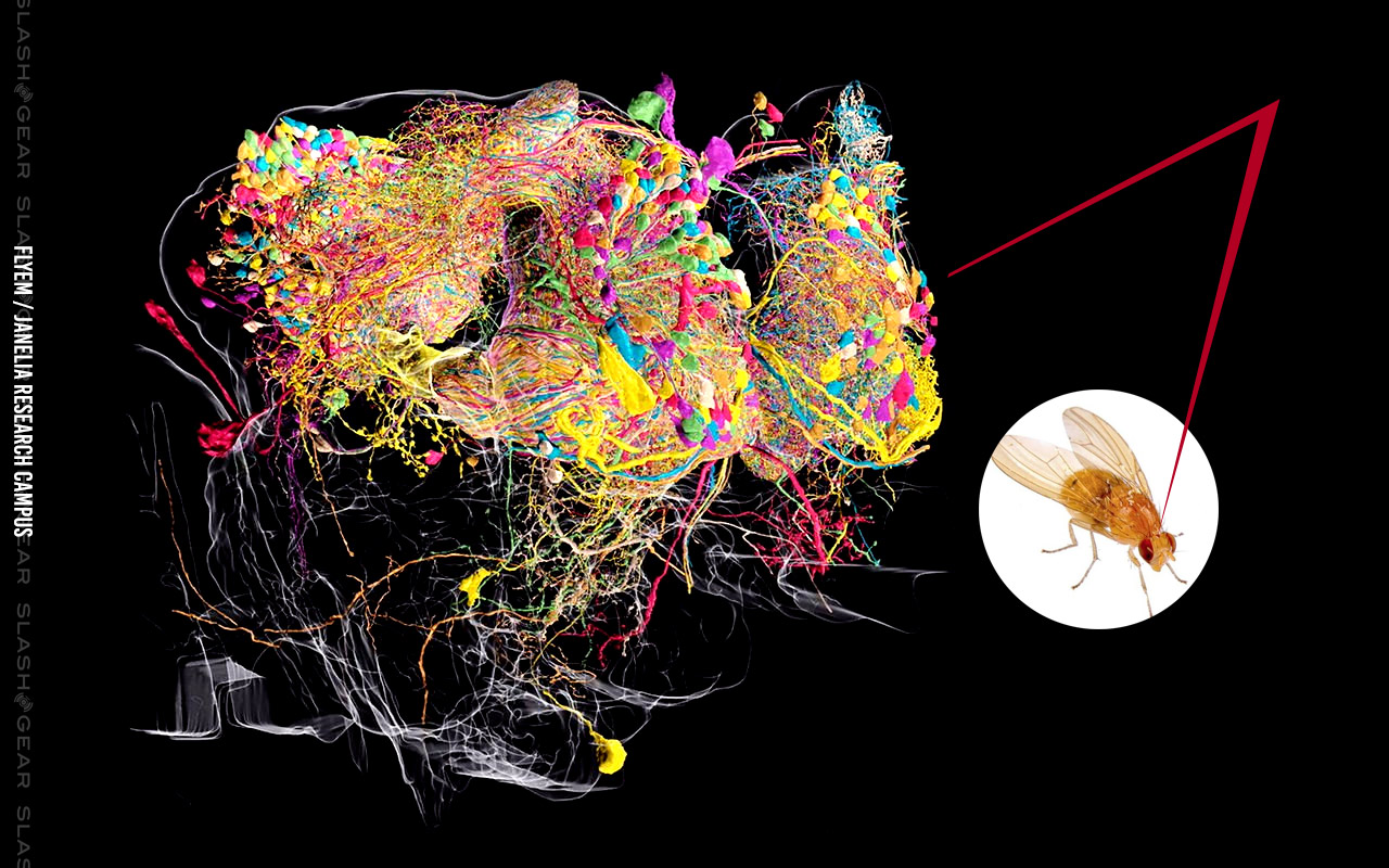 Google and JRC release world's highest-res map of a brain - SlashGear
