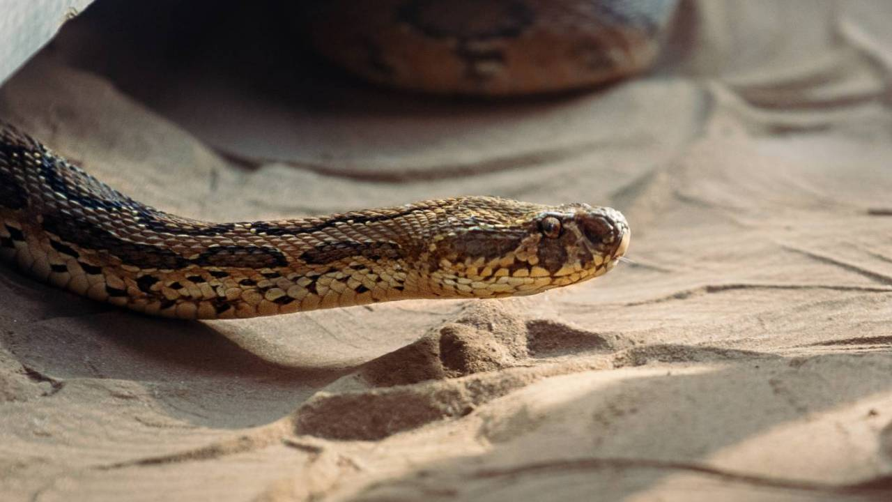 Novel coronavirus may have been transmitted to humans from snakes