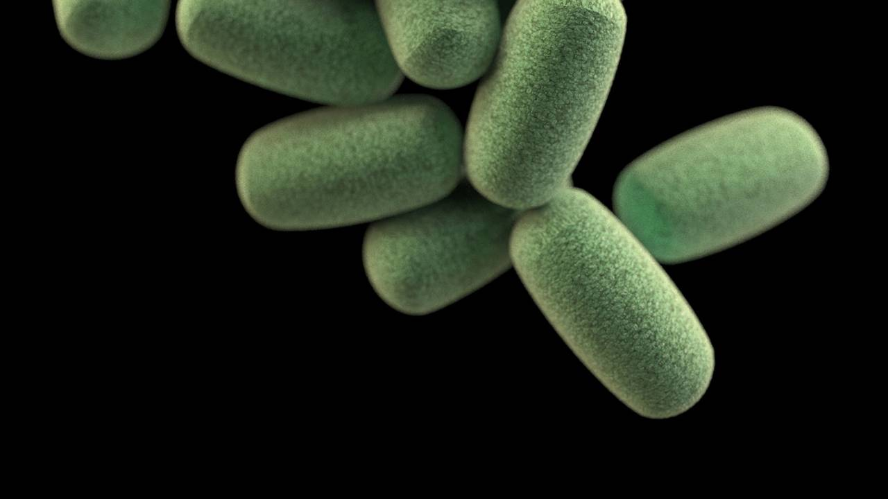 Oxford study finds gut bacteria may influence your social life